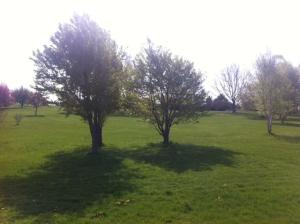 bcl_arboretum