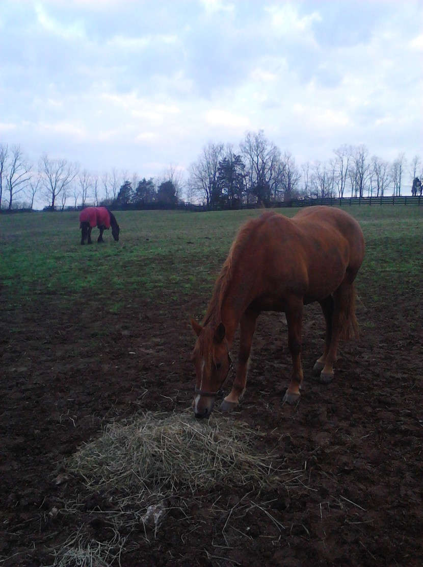 Spring grass isn't as enticing as hay for this horse on a farm in Jessamine County, Kentucky