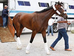 Kentucky Oaks contender Dreaming of Julia arrives at Churchill Downs  Photo: Reed Palmer