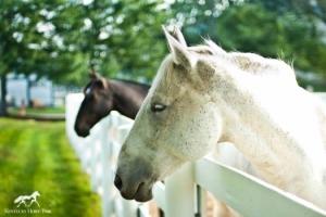 horsepark
