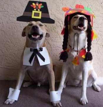 dog-thanksgiving